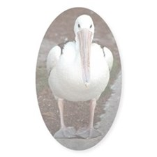 Pelican Lookin at You Oval Sticker (10 pk)