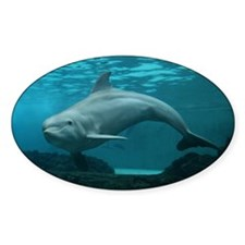 Damara the Dolphin Bumper Decal