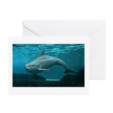 Damara the Dolphin Greeting Cards