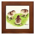 Silver Grey Dorking Chicks Framed Tile