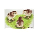 Silver Grey Dorking Chicks Rectangle Magnet (100 p