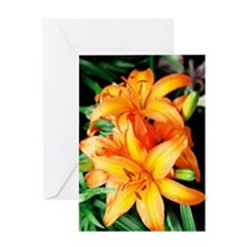 Lily - Greeting Card