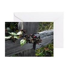 Fence Berries Greeting Cards (Pk of 10)