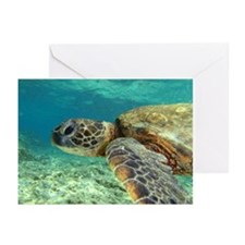 Sea Turtle Greeting Cards (Pk of 10)