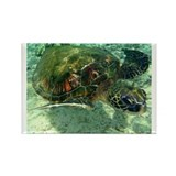 Sea Turtle Rectangle Magnet (10 pack)