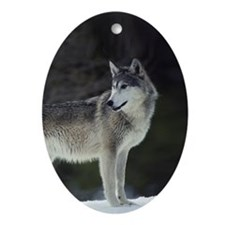 """Timber Wolf"" Oval Ornament"