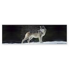 """""""Timber Wolf"""" Bumper Bumper Sticker"""