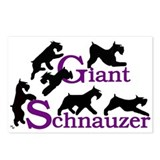 Cute Giant schnauzer art giant schnauzer Postcards (Package of 8)