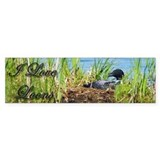 Common Loon on nest Bumper Stickers