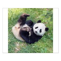 Giant Panda Small Poster