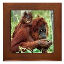 Orangutan's Framed Tile