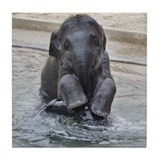 Asian Elephant Tile Coaster