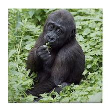 Relaxing Young Gorilla Tile Coaster