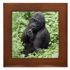 Relaxing Young Gorilla Framed Tile