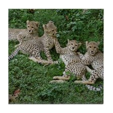 Young Cheetahs Tile Coaster