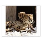 Mom and Baby Cheetah Small Poster