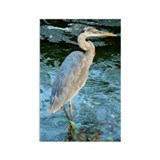 Funny Great blue heron Rectangle Magnet