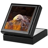 Sea of Cortez Sea Lion Keepsake Box