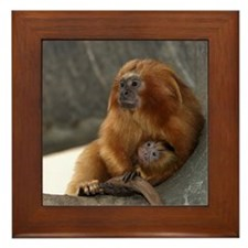 Golden Lion Tamarins Framed Tile