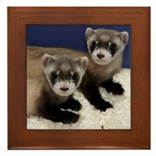 Black-footed Ferrets Framed Tile