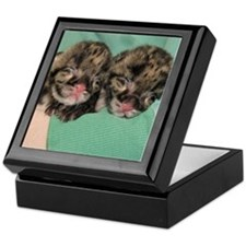 Clouded Leopard Cubs Keepsake Box