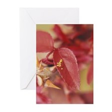 Mother's Day - Greeting Cards (Pk of 20)