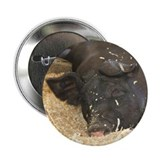 "Fine Swine 2.25"" Button (100 pack)"