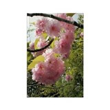 Cherry Blossom Rectangle Magnet