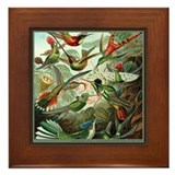 """Hummingbird Print"" Framed Tile"