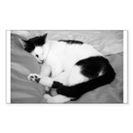 Sleepy Kitty Rectangle Sticker 50 pk)