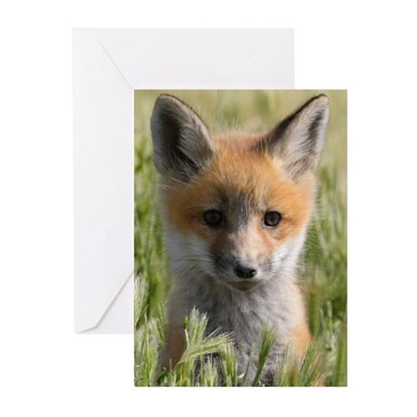 Curiosity. Greeting Cards (Pk of 10)