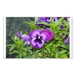 Purple Pansy Rectangle Sticker 10 pk)