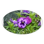 Purple Pansy Oval Sticker (10 pk)