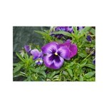 Purple Pansy Rectangle Magnet (100 pack)