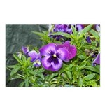 Purple Pansy Postcards (Package of 8)