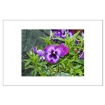 Purple Pansy Large Poster