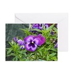 Purple Pansy Greeting Cards (Pk of 10)