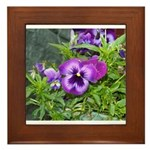 Purple Pansy Framed Tile
