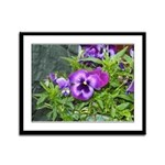 Purple Pansy Framed Panel Print