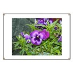Purple Pansy Banner