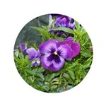 Purple Pansy 3.5