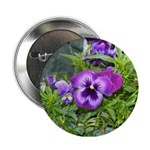 Purple Pansy 2.25