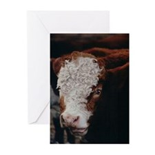 Cow-curls (Pk of 10)
