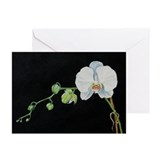 Watercolor White Orchid 5x7 Cards (Pk of 20)