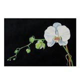 Watercolor White Orchid Postcards (Pkg 10)