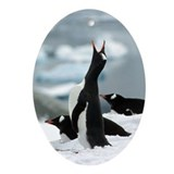 Singing Gentoon Penguin Keepsake (Oval) Ornament