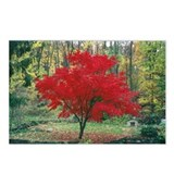Red Maple Postcards (Package of 8)