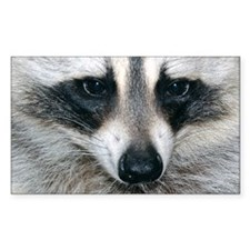 Raccoon Rectangle Sticker 10 pk)
