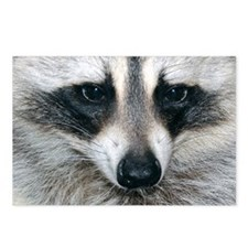 Raccoon Postcards (Package of 8)