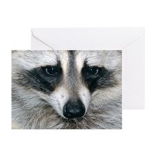 Raccoon Greeting Cards (Pk of 20)